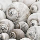 Snail Shells - Square Prints by  Lebens Art