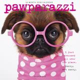 Pawparazzi - 2018 Calendar Calendars