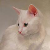 White Kitten Metal Print by Diane Hoeptner