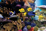 Tropical Fish & Coral Plakater