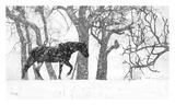 Desperado Prints by Matthew Platz
