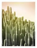 Pink Sky Cactus Prints by Lexie Greer
