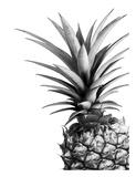 Pineapple Prints by Lexie Greer
