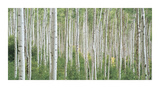 Early Autumn Aspens Giclee Print by Dennis Frates