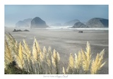 Pampas Beach Print by Dennis Frates