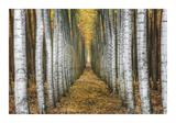 Tree Farm Giclee Print by Michael Cahill