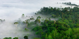 Mist and Low Cloud Hanging over Lowland Dipterocarp Rainforest with Emergent Menggaris Tree Visible Photographic Print by Steve Bloom