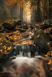 Autumn Forest, Carpathian Mountains, Slovakia, Europe Photographic Print by Nico Stengert