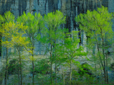 Buffalo National River, Ar: Spring Morning Light on Trees across from Roark Bluff Photographic Print by Terry Donnelly