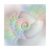 Chambered Nautilus Cutaway Shells on Colorful Art by Stela Knezevic
