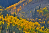 Fall Color Comes to Colorado Along Hwy 145 South of Telluride, Colorado Photographic Print by Ray Mathis