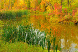 Autumn Colors in Seine River Forest, Winnipeg, Manitoba, Canada Photographic Print by Chris Cheadle