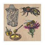 Bees, Beekeeping, and Honey Posters by  KUCO