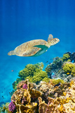 Marsa Alam - Underwater View at Sea Turtle and the Reef, Red Sea, Egypt Photographic Print by Jan Wlodarczyk