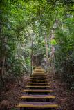 Wooden Steps in Jungle, Kuala Tahan, Taman Negara, Malaysia Photographic Print by Klaus-Peter Wolf