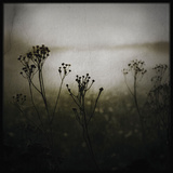 Flower Stems in Winter Photographic Print by Tim Kahane
