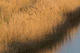 Cley Marshes Norfolk Wildlife Trust Reserve Norfolk Winter Photographic Print by David Tipling