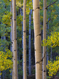 Gunnison National Forest, Colorado Photographic Print by Terry Donnelly