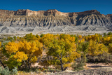 South Caineville Mesa, Cottonwood Trees, Capitol Reef National Park, Utah, USA Photographic Print by Witold Skrypczak