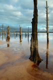 Drowned Trees on the Shore of Theewaterskloofdam, Western Cape, South Africa Photographic Print by David Noton