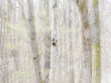 Close-Up of Trees in Forest Photographic Print by Mikael Svensson