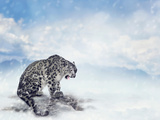 Snow Leopard Sitting on the Rock Photographic Print by Svetlana Foote