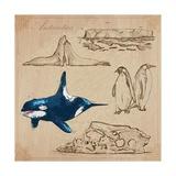 Travel Series: Polar Regions - Antarctica Poster by  KUCO