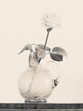 Still Life with Rose in Glass Vase Photographic Print by Klaus-Peter Wolf