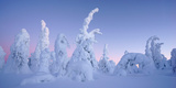 Snow Covered Trees, Kuusamo Area, Finland Photographic Print by Klaus-Peter Wolf