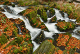 Waterfall in the Selke River in Autumn, Alexisbad, Saxony-Anhalt, Germany Photographic Print by Klaus-Peter Wolf