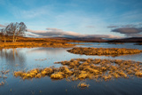 Early Morning Light at Rannoch Moor, Scotland UK Photographic Print by Tracey Whitefoot