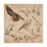 Travel Series: Polar Regions - Antarctica Prints by  KUCO
