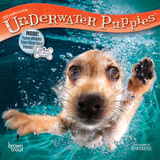 Underwater Puppies - 2018 Mini Calendar Kalenders