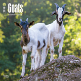 Goats - 2018 Calendar Calendars