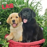 Labrador Retriever Puppies - 2018 Calendar Calendarios