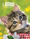 Kittens - 2018 Planner Kalenders