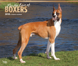 For the Love of Boxers Deluxe - 2018 Calendar Calendars