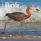 Florida, Wild & Scenic - 2018 Mini Calendar Calendarios