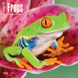 Frogs - 2018 Calendar Calendriers