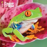 Frogs - 2018 Calendar Kalenders
