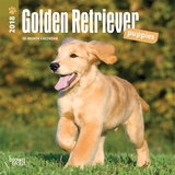 Golden Retriever Puppies - 2018 Mini Calendar Kalenders