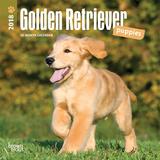 Golden Retriever Puppies - 2018 Mini Calendar Calendars
