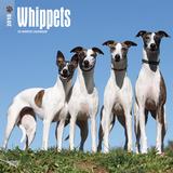 Whippets - 2018 Calendar Calendars