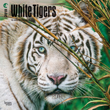 White Tigers - 2018 Calendar Kalender