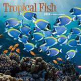 Tropical Fish - 2018 Calendar Kalendere