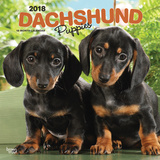Dachshund Puppies - 2018 Calendar Calendars