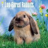 Lop Eared Rabbits - 2018 Calendar Calendars