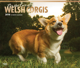 For the Love of Welsh Corgis Deluxe - 2018 Calendar Calendriers