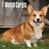 Welsh Corgis - 2018 Calendar Kalenders