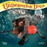 Underwater Dogs - 2018 Mini Calendar Calendars